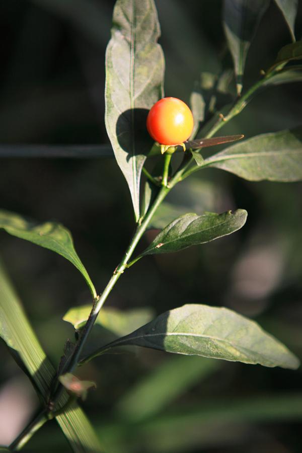 Fruit by Mrhayata