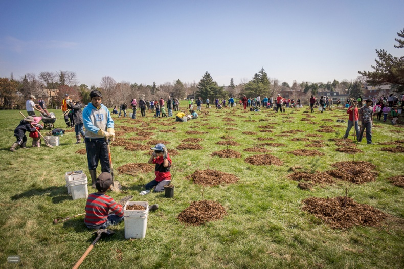 Volunteers planting new trees in Milliken Park