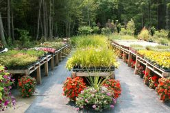 Fern-Forest-Gardens