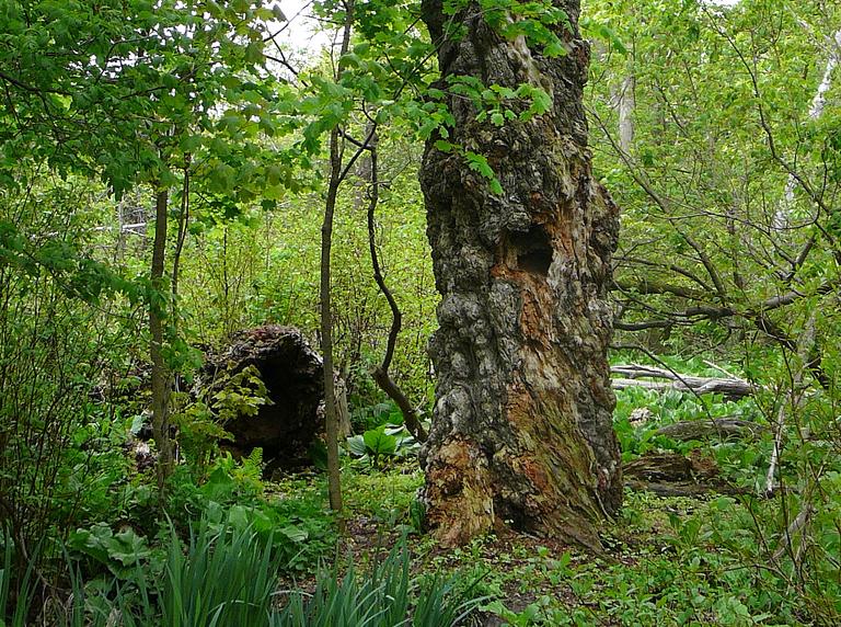 Old tree by Steve Harris