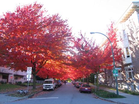 street trees toronto