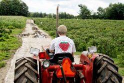 Andrews-Scenic-Acres-Farm-Strawberry-Tractor