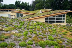 Green-Roof-by-Arlington-County