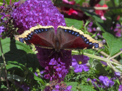 rosetta gardens 13