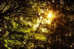 sunlight-by-keartona