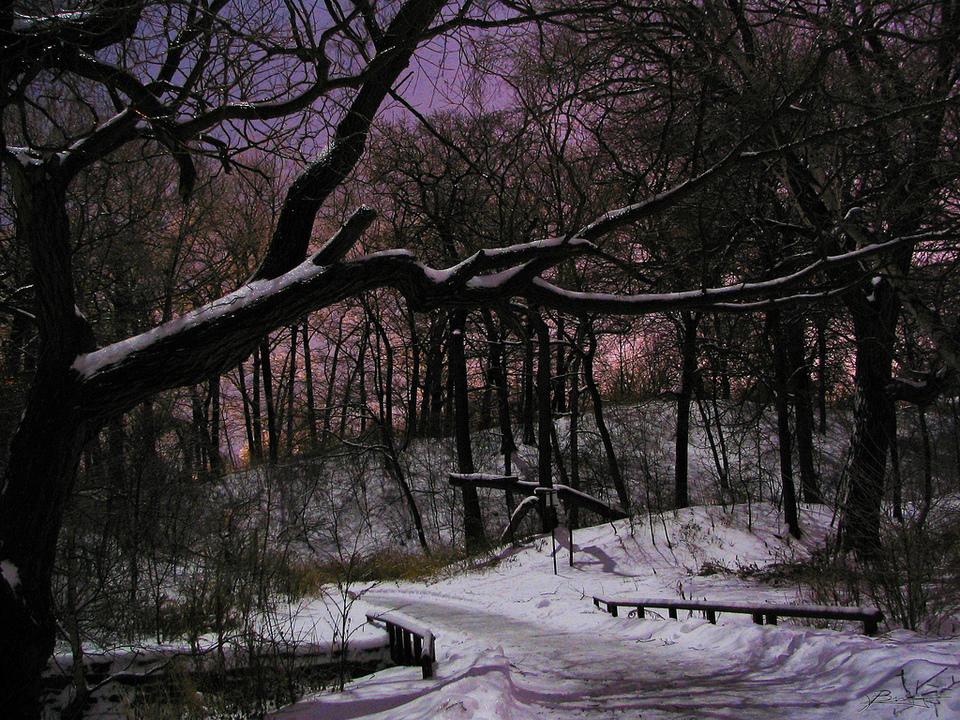 Winter Night In Hide Park In Toronto