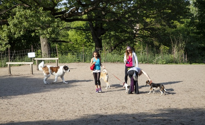 'Off leash' area for all the dog lovers