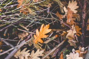 nature-bush-leaf-leaves
