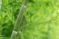 Bamboo Bokeh by Steve Webel