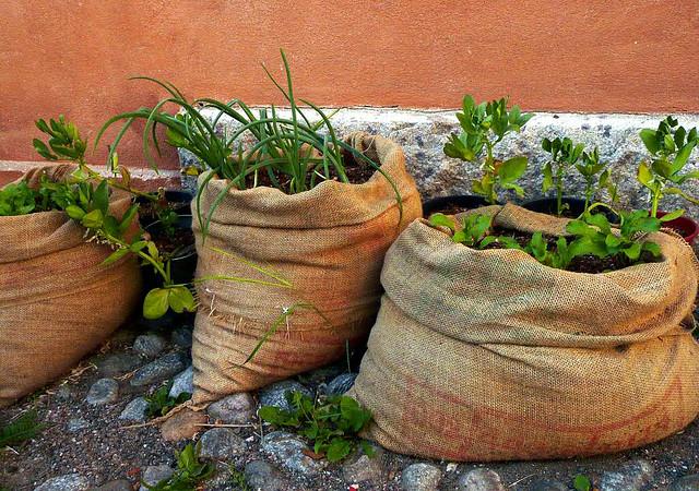 Urban Agriculture by Qtea