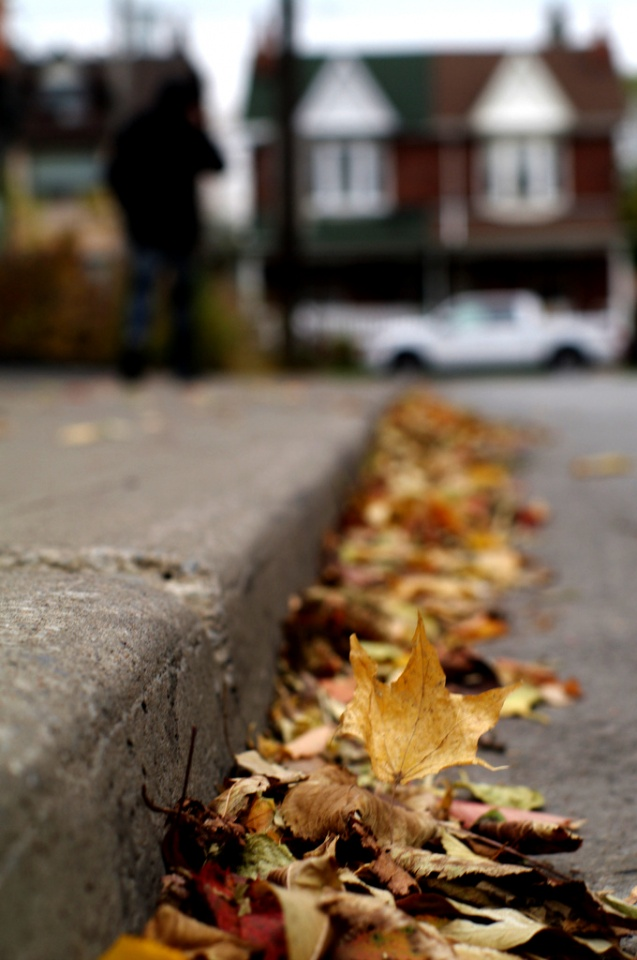 Fallen Leaves by Knehcsg