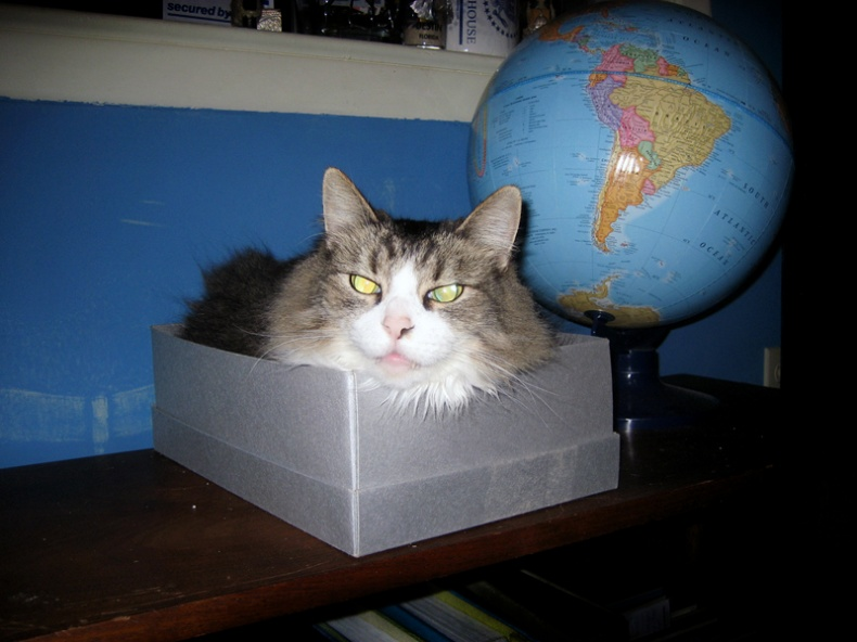 Cat in box by Kerry Vaughan