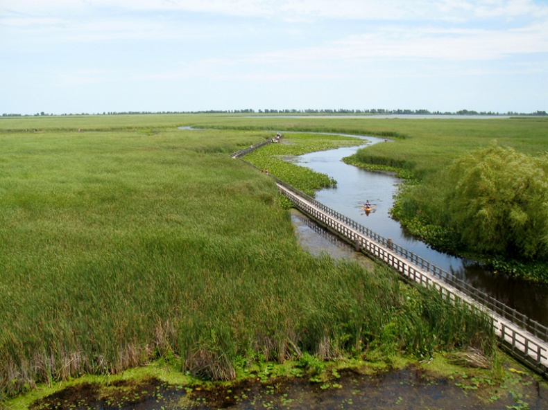 View from the Point Pelee Marsh Boardwalk Observation Tower by Jamie