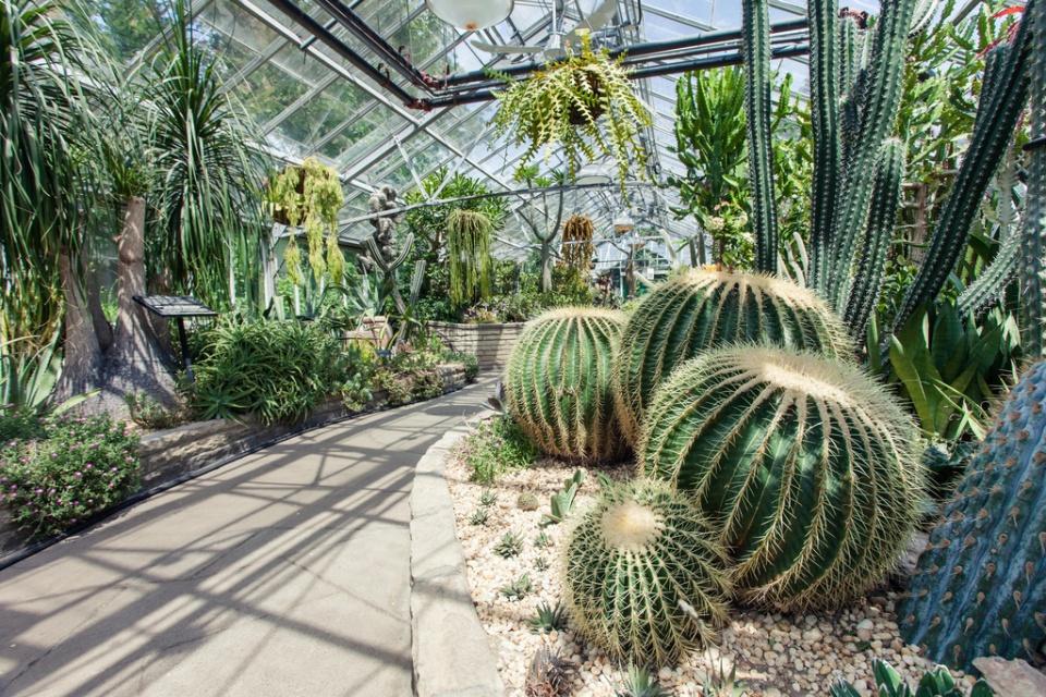 Cactus House Allan Gardens Conservatory