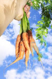 Carrots aloft