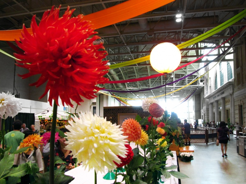 Dahlias at the CNE