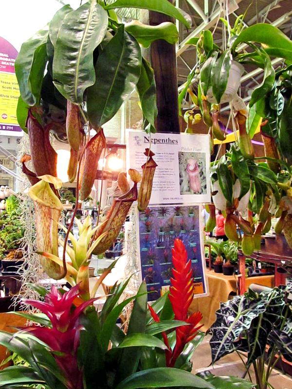 Plant vendors2