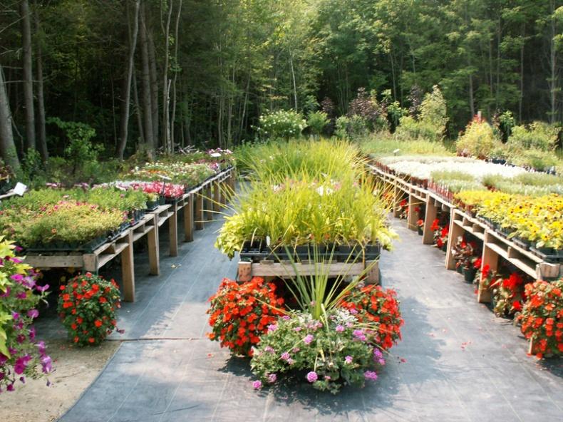 Fern Forest Gardens