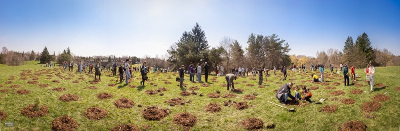 Trees Across Toronto Event Panorama