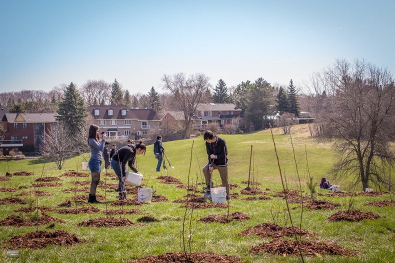 Working together to plant new trees