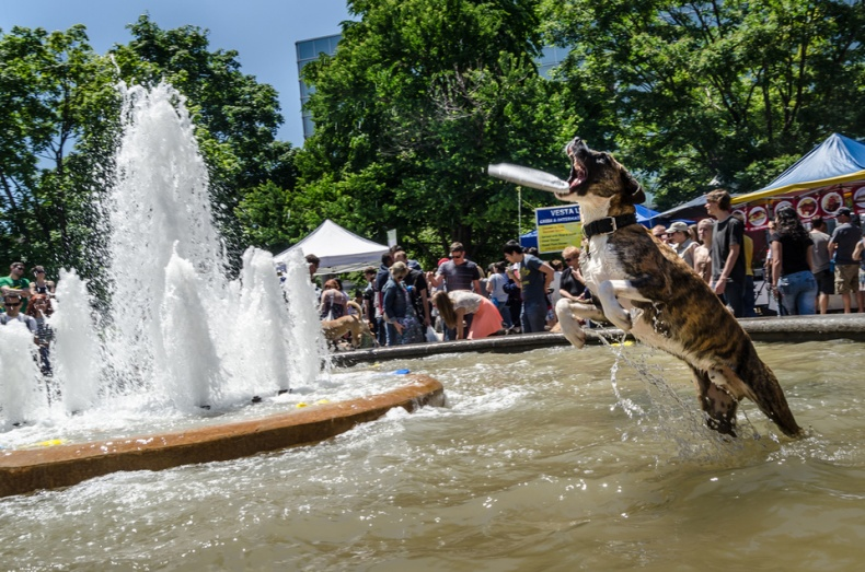 Dog in a fountain at Woofstock