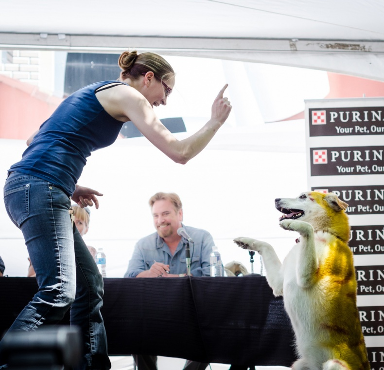 Dog tricks at Woofstock stage