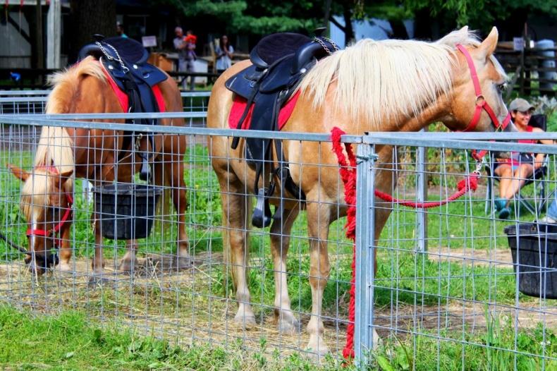 Horses on Andrews Scenic Acres Farm
