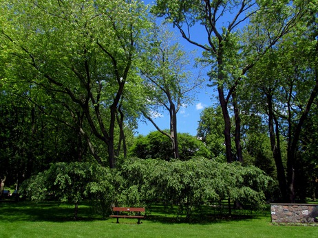 rosetta gardens 6