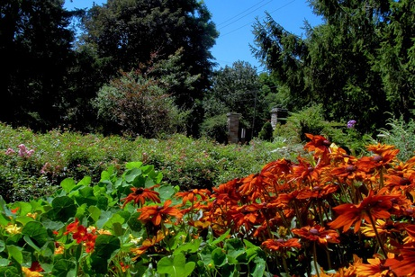 rosetta gardens 91