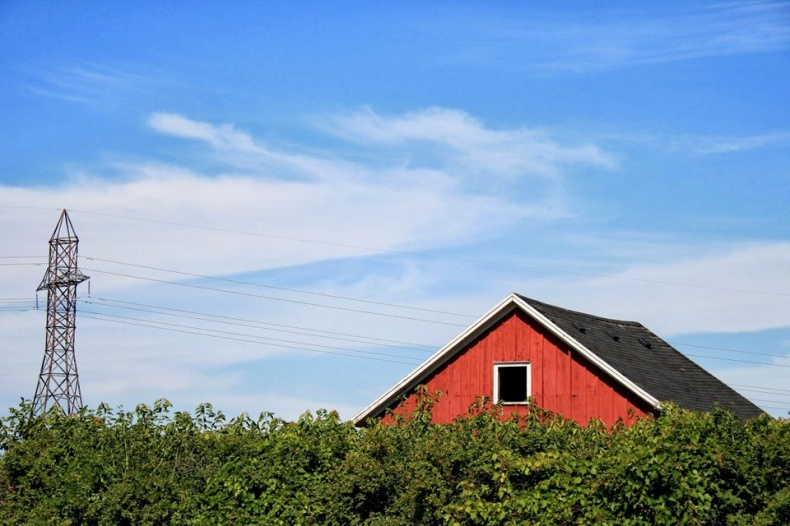 Roof of Red Barn in Cherry Avenue Farm
