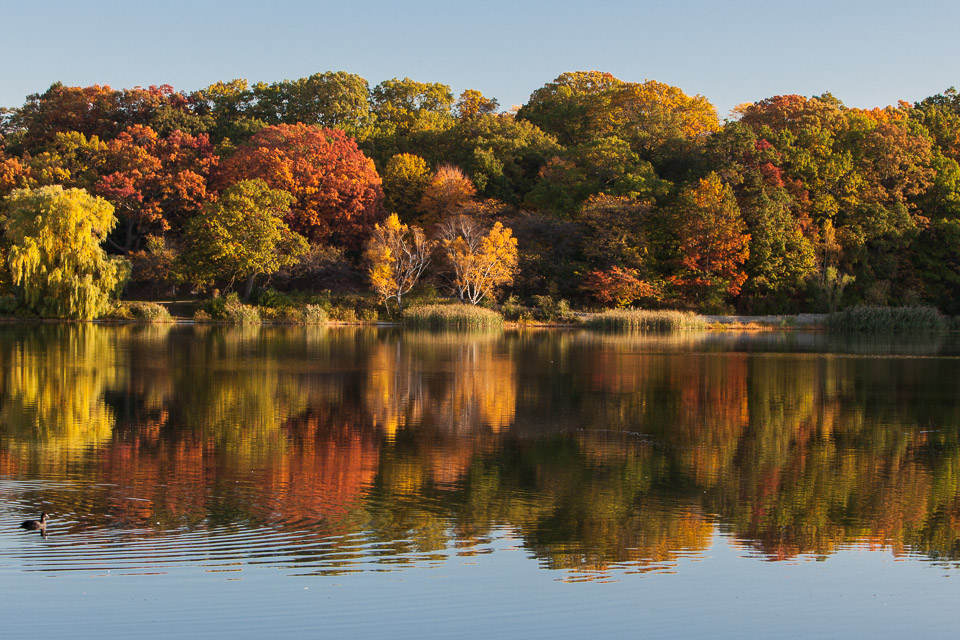 High Park in Autumn
