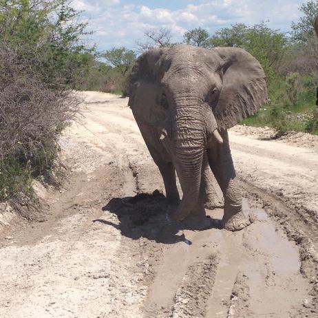 Jen P trip to Namibia pic
