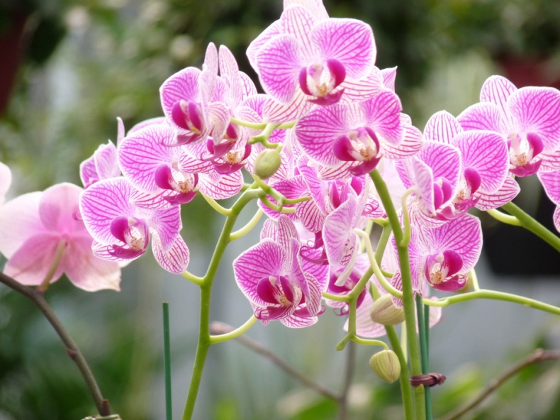 Orchids by Virginia Sanderson