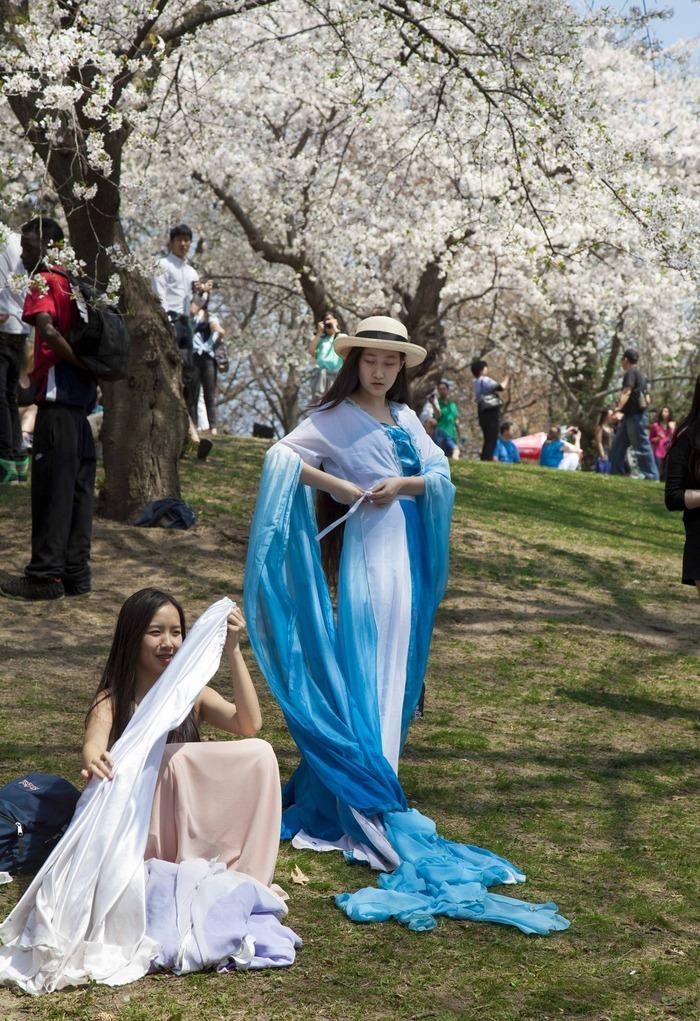 Sakura hanami with style