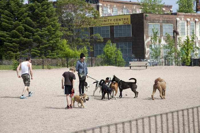 The 'off leash' play area for the dogs