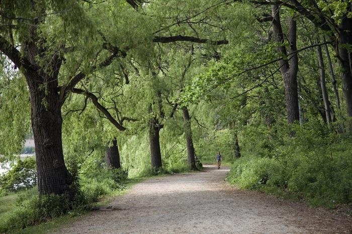 Forrest trails used for jogging