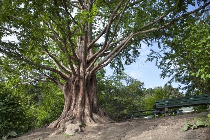 Hidden spots of High Park