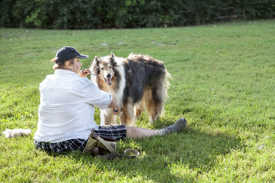 Best Off Leash Dog Parks Toronto