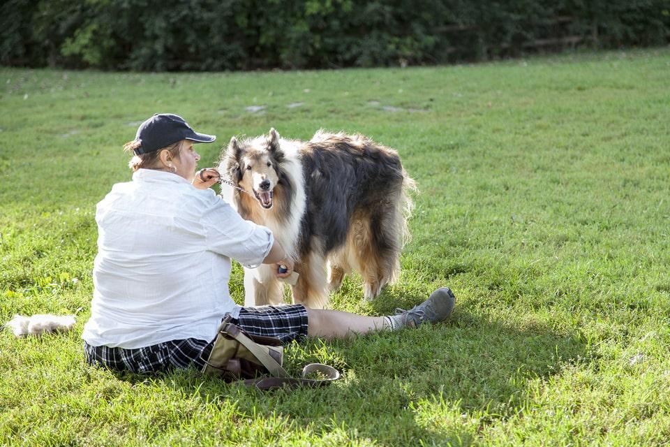 Best Off Leash Dog Parks In Toronto