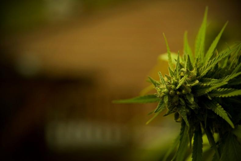Weed by Marc Fuya