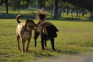 Dogpark by Jaredten