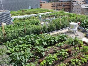 overlooks ryerson urban farm right across = greenery!