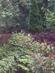 7. south garden bird watching